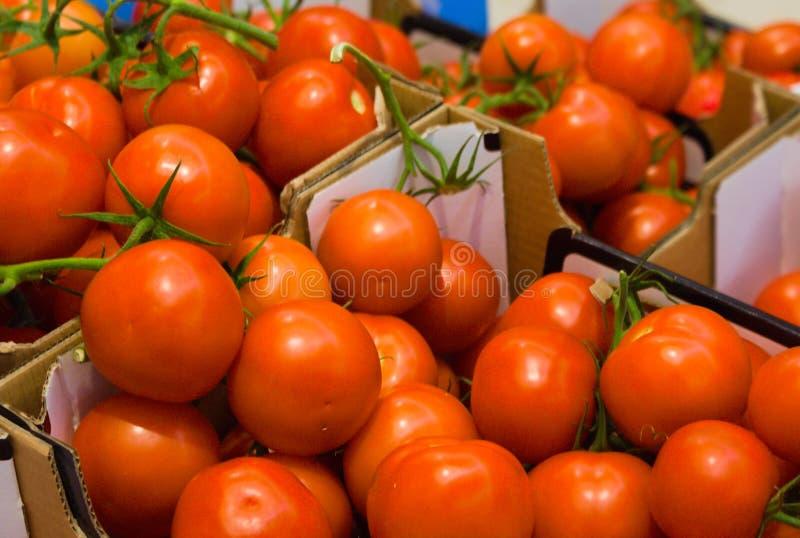 Pude?ko ?wiezi pomidory zdjęcie royalty free