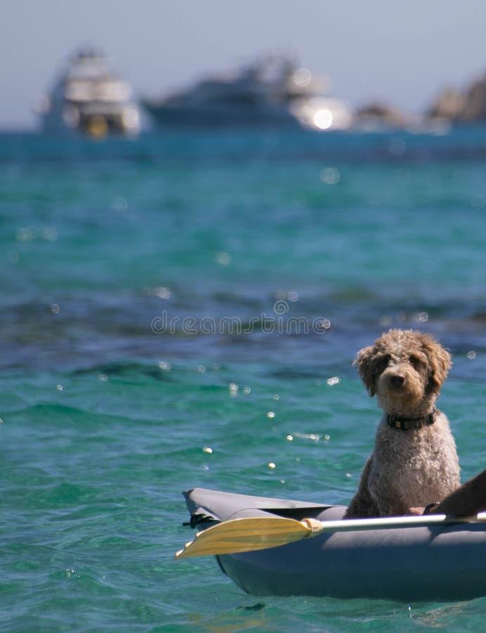 Pudel, der in einem aufblasbaren Kanu auf dem blauen Meer sitzt stockbild