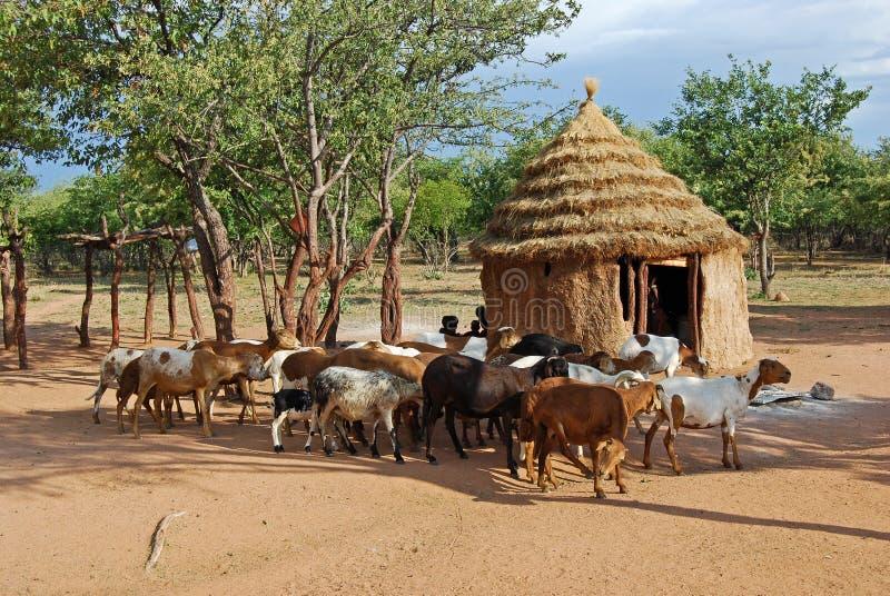 Pueblo de Himba con las chozas tradicionales cerca del parque nacional de Etosha en Namibia foto de archivo libre de regalías