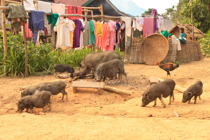 Pueblo de la tribu de la colina de Laos en la manera de Vangvieng a Luang Prabang imagen de archivo libre de regalías