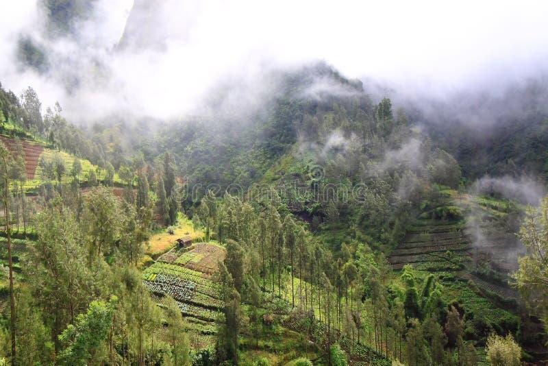 Pueblo del Mt Bromo Cemoro Lawang fotos de archivo