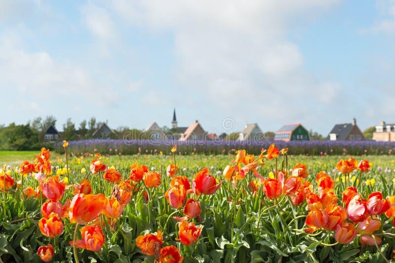Pueblo Den Hoorn en el holandés Texel fotografía de archivo