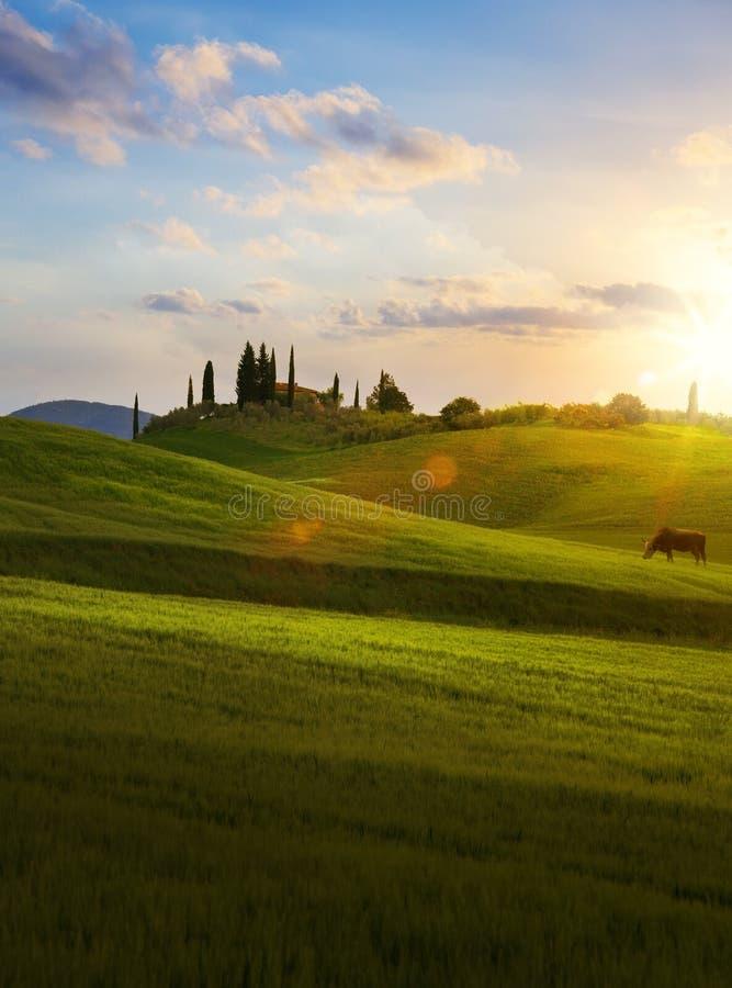 Pueblo en Toscana; Paisaje del campo de Italia con el rol de Toscana fotos de archivo