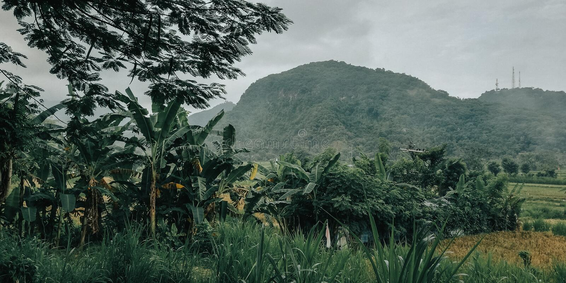 Pueblo natural, de Bali Indonesia, fondo para su bandera, fondo del negocio, y etc fotos de archivo