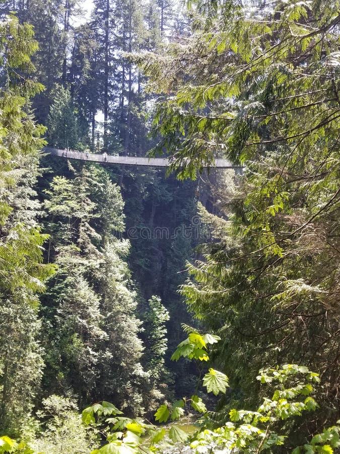 Puente colgante de Vancouver Capilano foto de archivo libre de regalías
