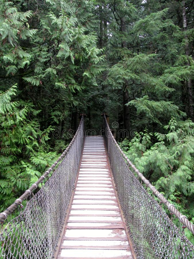 Puente colgante en el parque de Lynn Canyon foto de archivo libre de regalías