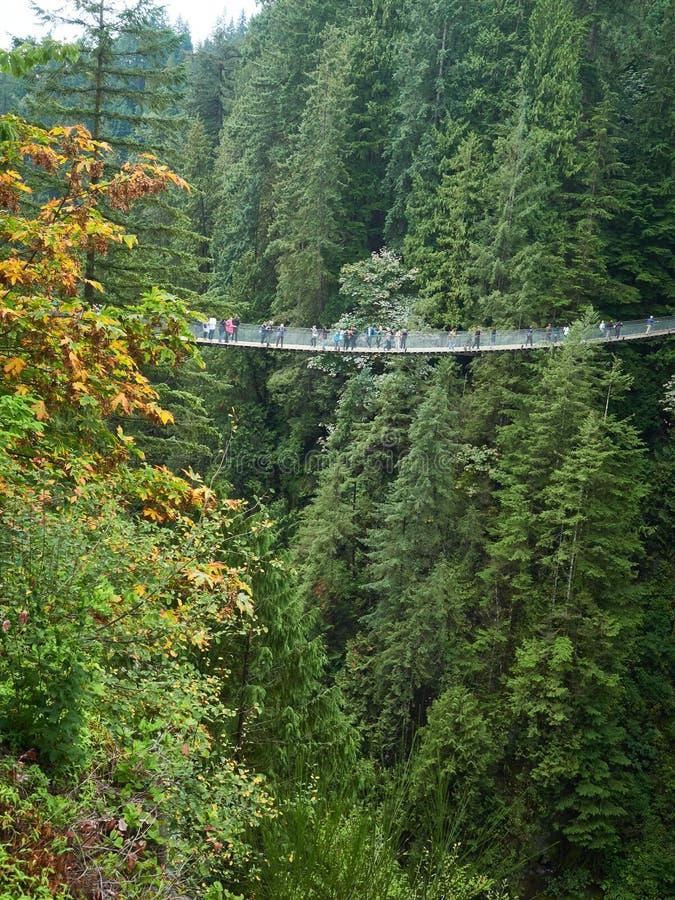 Puente colgante sobre bosque del valle de Capilano en Vancouver Canadá con las porciones de gente fotografía de archivo libre de regalías
