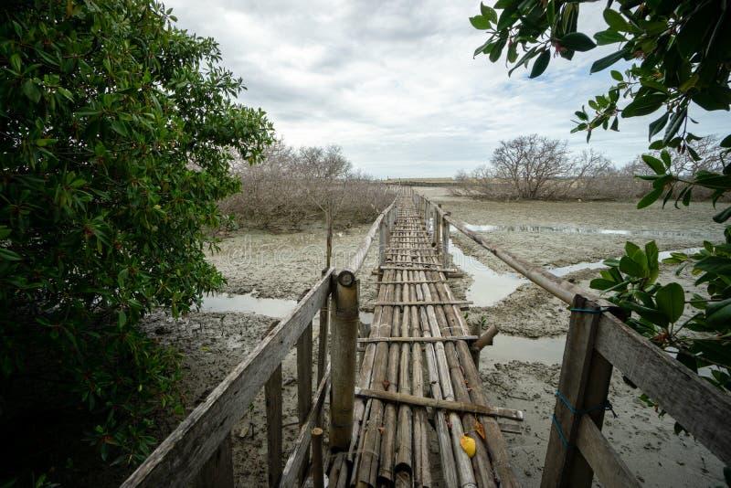Puente de bamb? r?stico cerca de los puertos Bali de Benoa No es conectar con dondequiera, apenas un lugar para la gente que quie foto de archivo libre de regalías