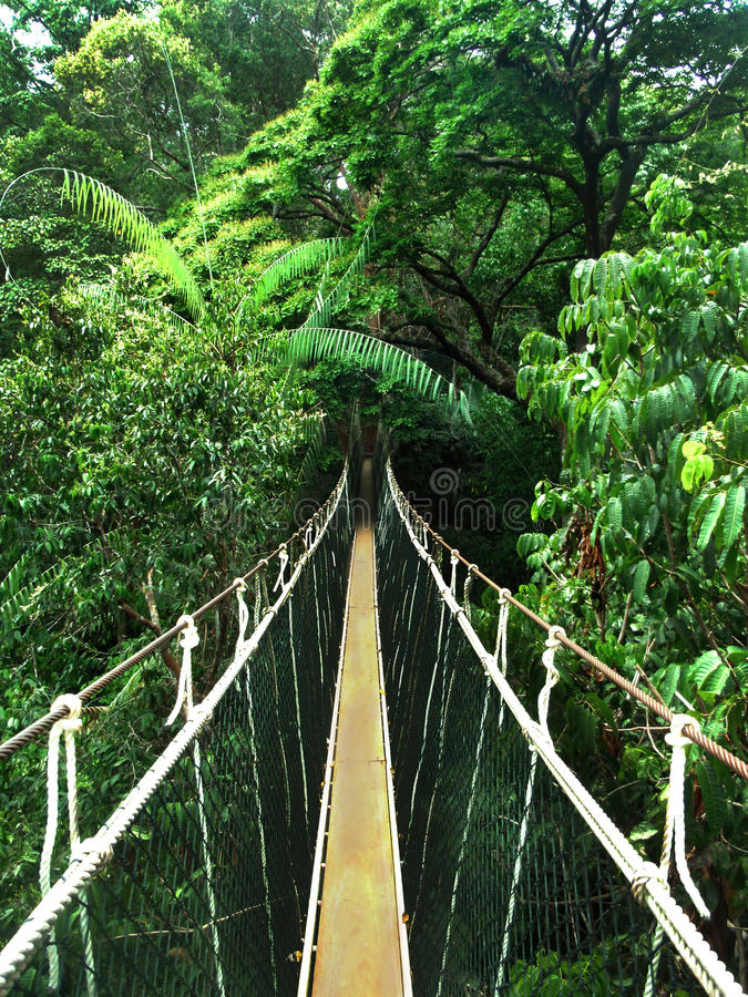 Puente de cuerda en la selva fotos de archivo libres de regalías