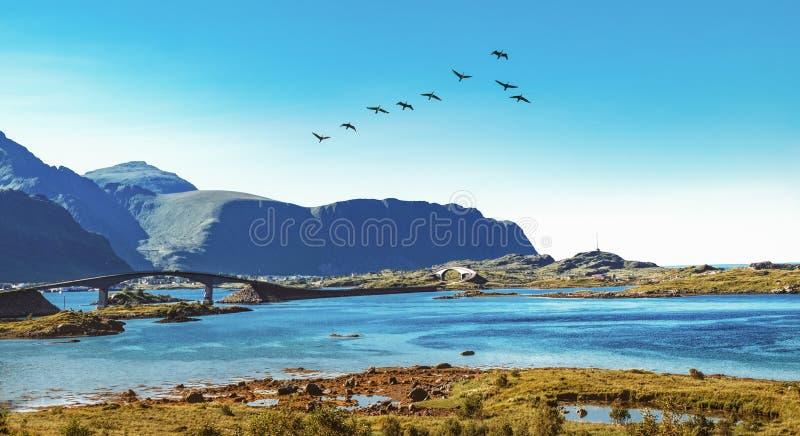 Puente de Fredvang en el archipiélago de Lofoten, Noruega foto de archivo libre de regalías
