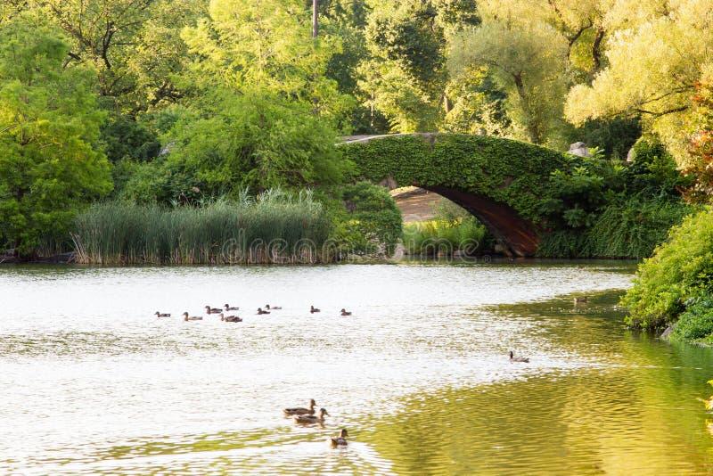 Puente de Gapstow, Central Park, Nueva York imágenes de archivo libres de regalías