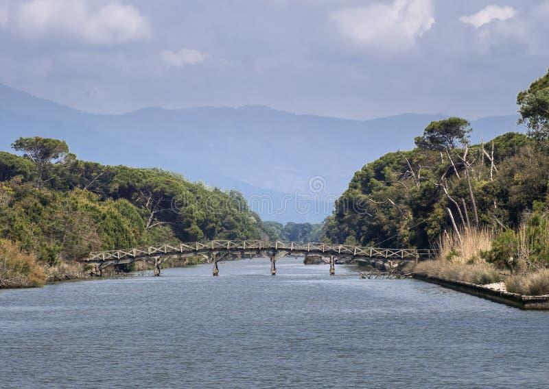 Puente de madera antiguo sobre el río en el parque natural escénico de Migliarino San Rossore Massaciuccoli Cerca de Pisa, en Tos imágenes de archivo libres de regalías