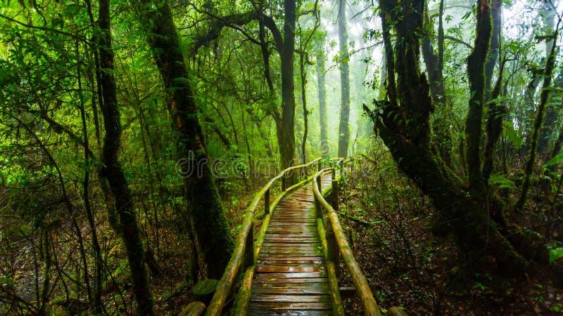 Puente de madera con el musgo en parque natural debajo de la lluvia foto de archivo