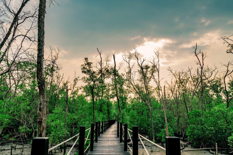 Puente de madera con la cerca de la cuerda en bosque del mangle con los árboles muertos a fotos de archivo libres de regalías