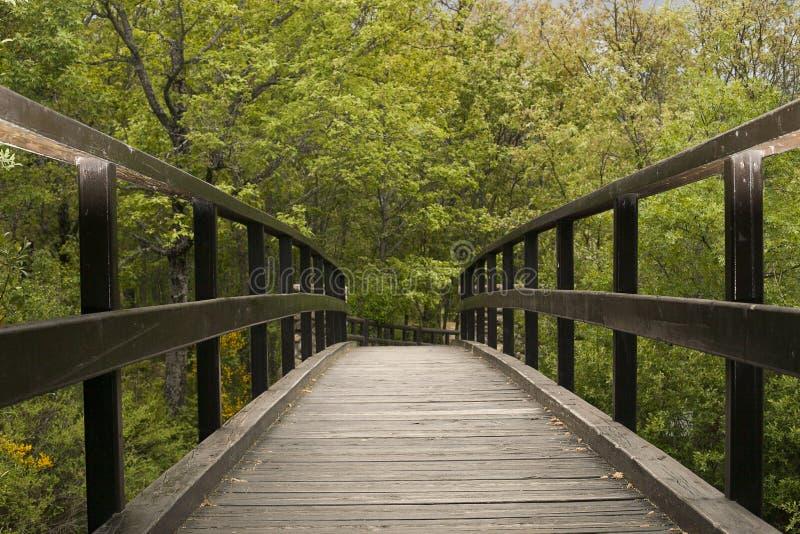 Puente de madera de la naturaleza imagenes de archivo