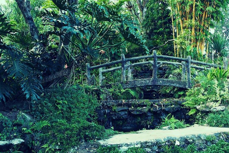 Puente de madera de la vid verde en jardín fotografía de archivo