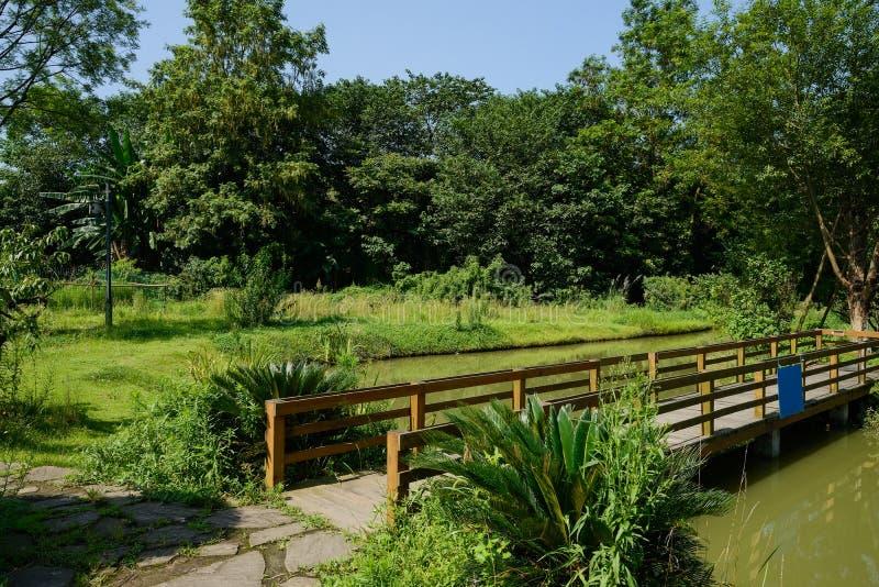Puente de madera del pie en la charca verde en día de verano soleado fotografía de archivo