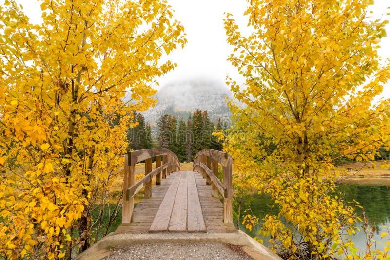 Puente de madera entre dos árboles de pino amarillos del otoño y el aire brumoso de la montaña en fondo en parque nacional de la  imagenes de archivo