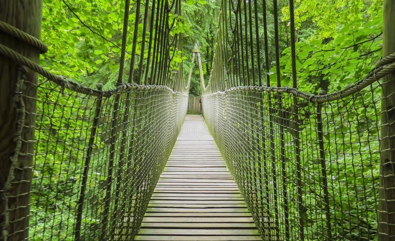 Puente de madera de la casa del árbol, de madera y de cuerda de Alnwick, jardín de Alnwick, en el condado inglés de Northumberlan foto de archivo