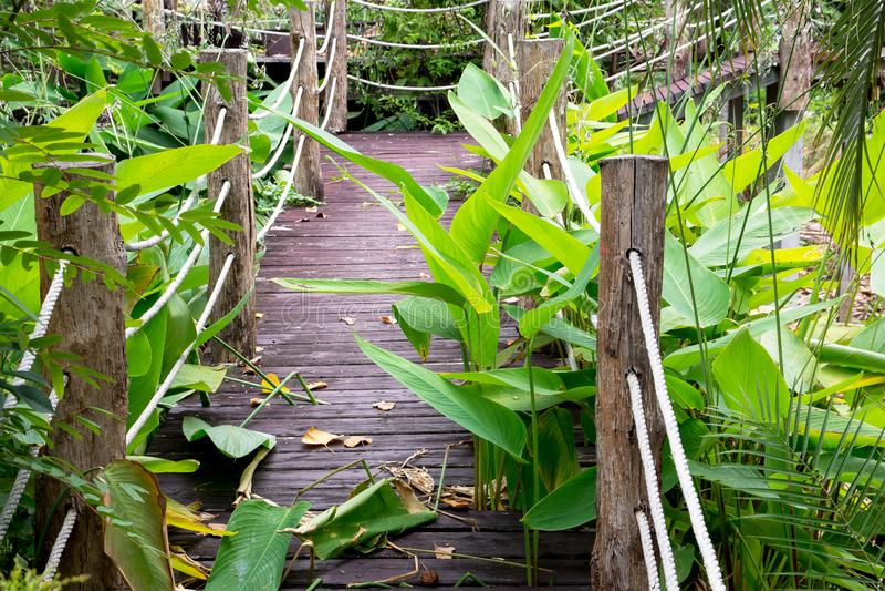 Puente de madera viejo abandonado en el parque foto de archivo libre de regalías