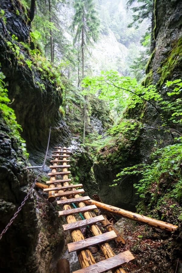 Puente de madera viejo abandonado en selva tropical fotos de archivo