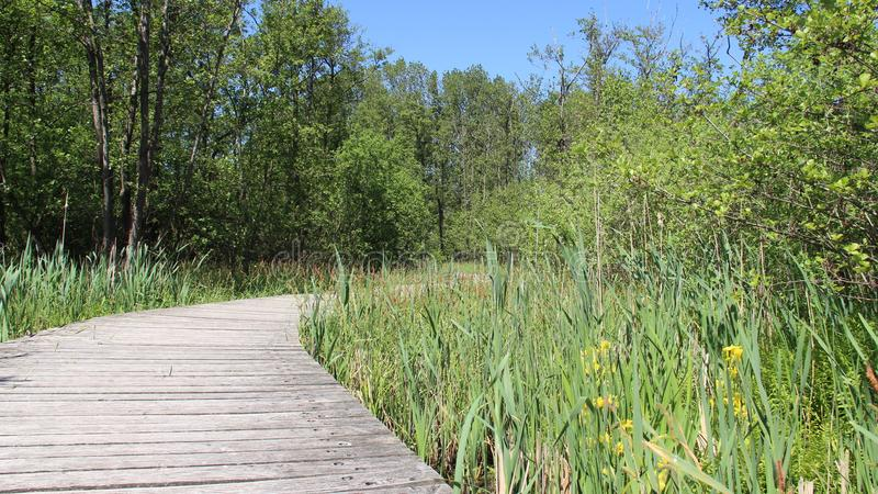 Puente de madera y humedal largos foto de archivo libre de regalías
