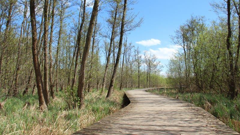 Puente de madera y humedales largos fotos de archivo