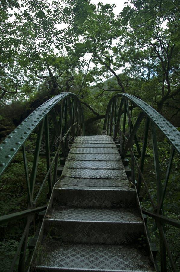 Puente del hierro en selva imagenes de archivo