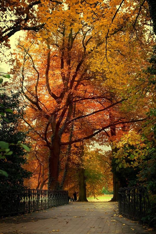 Puente del otoño foto de archivo