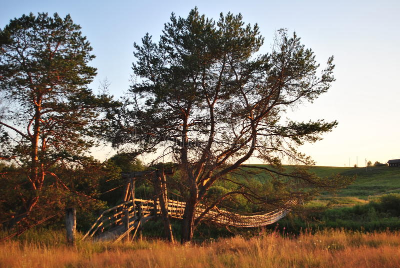 Puente del pino y de ejecución en la puesta del sol foto de archivo libre de regalías