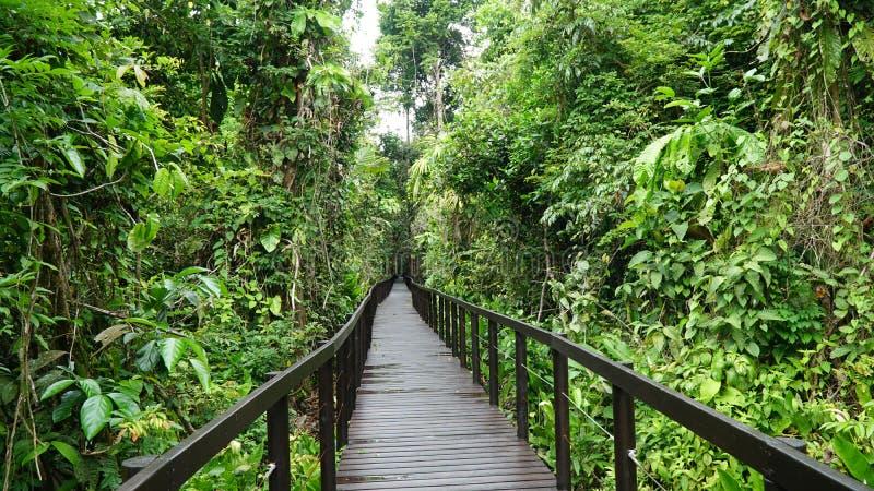 Puente en la selva del parque nacional de Cahuita, el Caribe, Costa Rica fotos de archivo