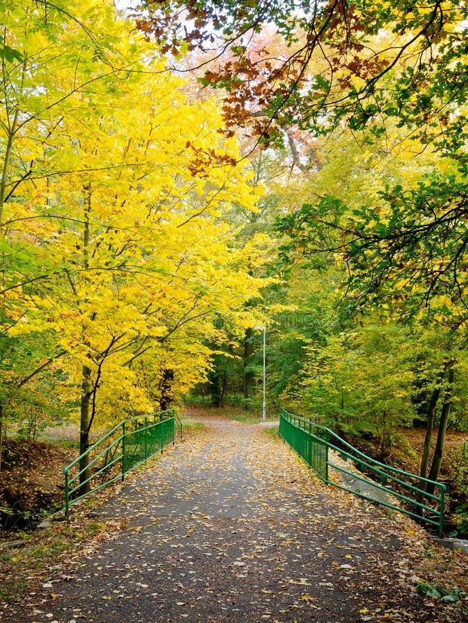 Puente en un bosque fotografía de archivo libre de regalías