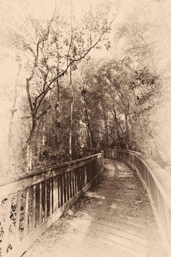 Puente en un bosque imágenes de archivo libres de regalías