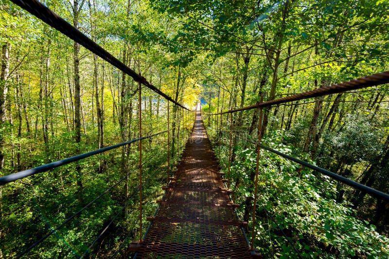 Puente estrecho del pie del metal a trav?s del bosque en oto?o foto de archivo