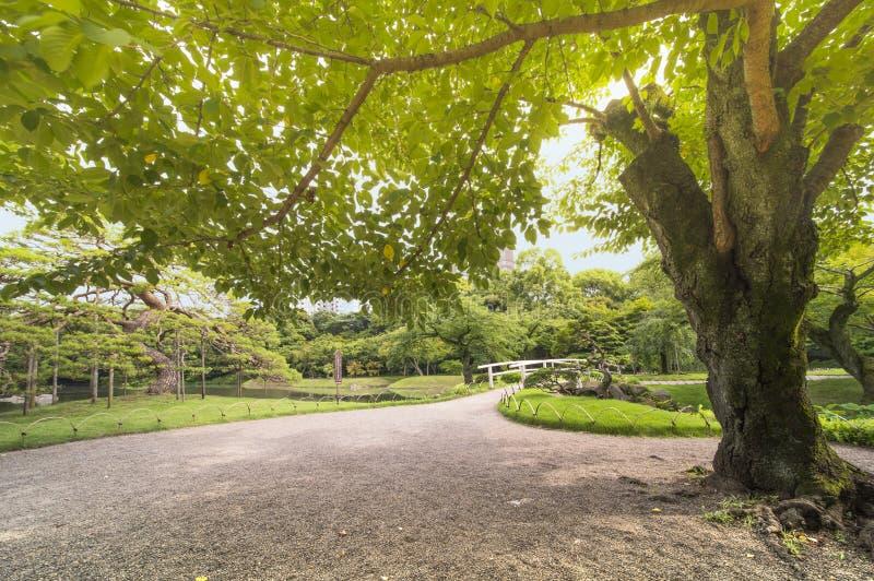 Puente japonés rodeado por los pinos, los arces y la cereza hermosos imagen de archivo