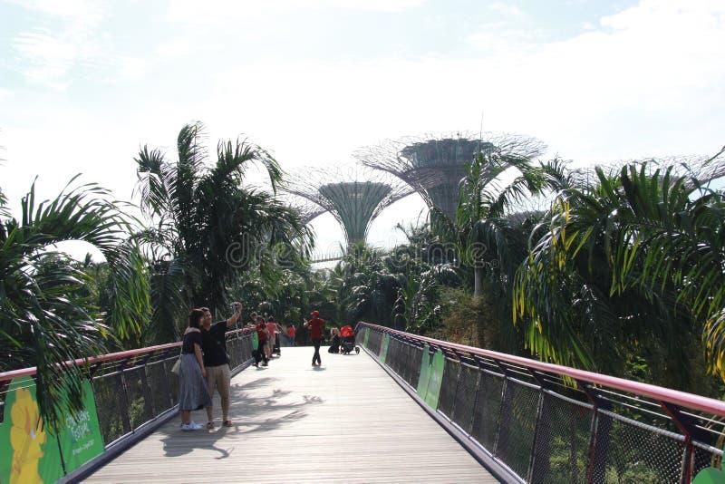 Puente a los jardines en la bahía de Marina Bay Sands en Singapur imagen de archivo libre de regalías