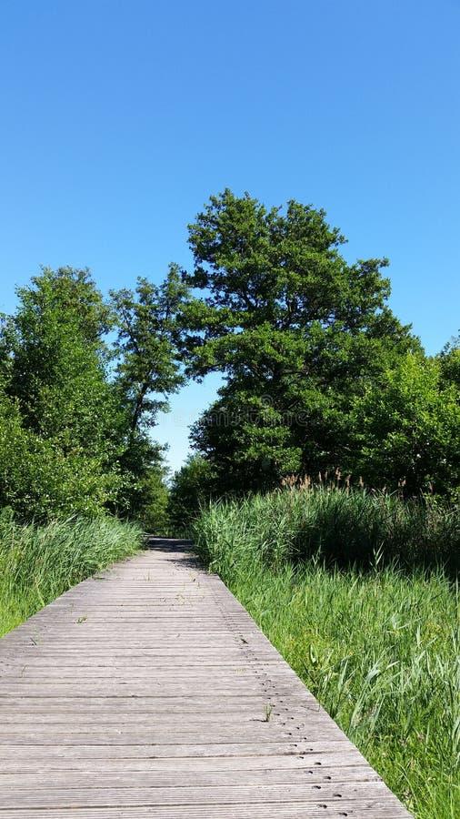 Puente natural y de madera verde con las cañas jovenes fotos de archivo libres de regalías