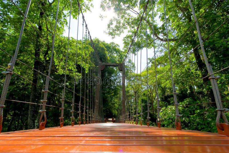 Puente o puente colgante de cuerda en bosque en las delanteras de Khao Kradong foto de archivo