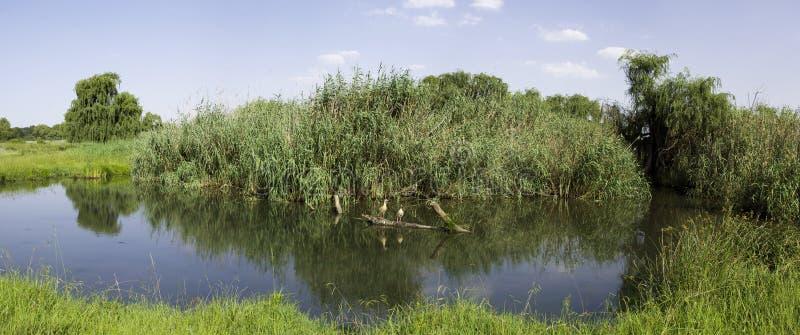 Puente Otter, Reserva Natural de Rietvlei, Sudáfrica imágenes de archivo libres de regalías