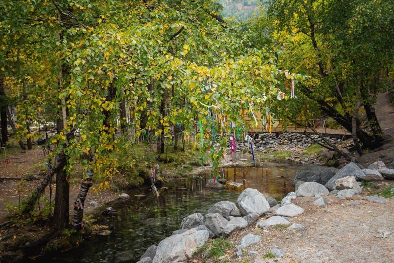 Puente sobre una corriente entre abedules, otoño imagen de archivo libre de regalías