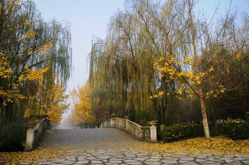 Puente y árboles en niebla del invierno imagenes de archivo