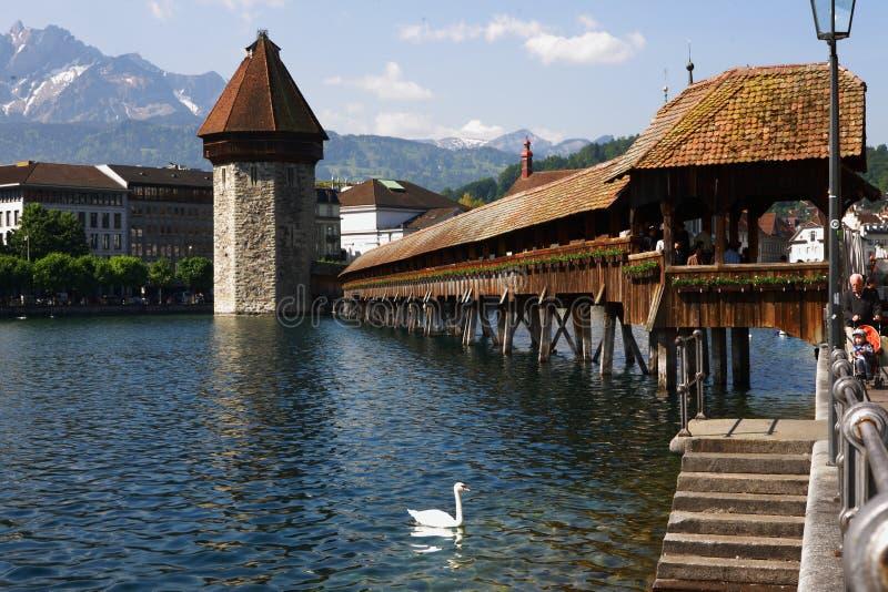 Puente y cisne de madera de Lucerna Suiza foto de archivo