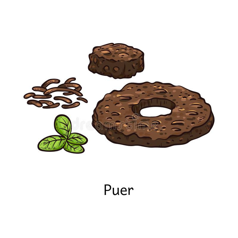 Puer tea drawing in fresh and compressed form, brown donut shape disk of dry pressed plants. And fresh green leaves, traditional Chinese drink ingredient royalty free illustration