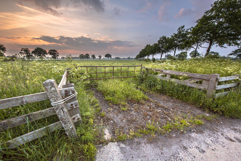 Puerta al prado adornado con la flor del perejil de vaca fotografía de archivo libre de regalías