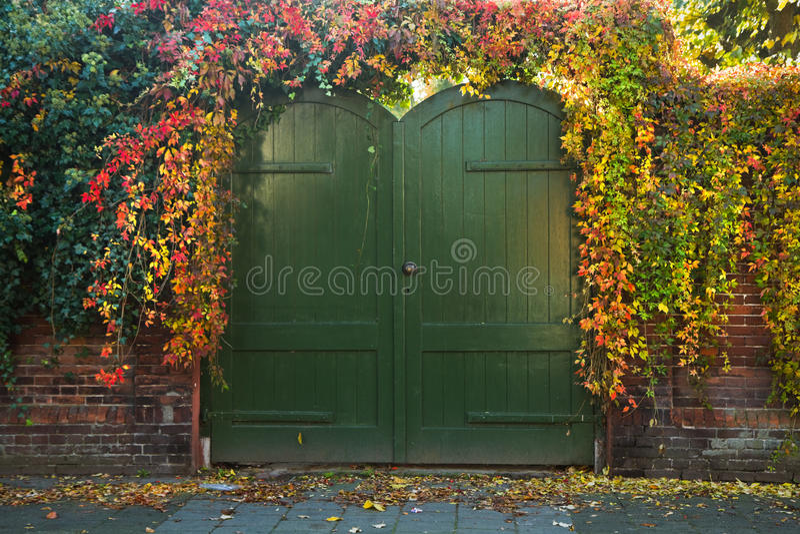 Puerta con la enredadera colorida de Virinian en otoño fotos de archivo libres de regalías