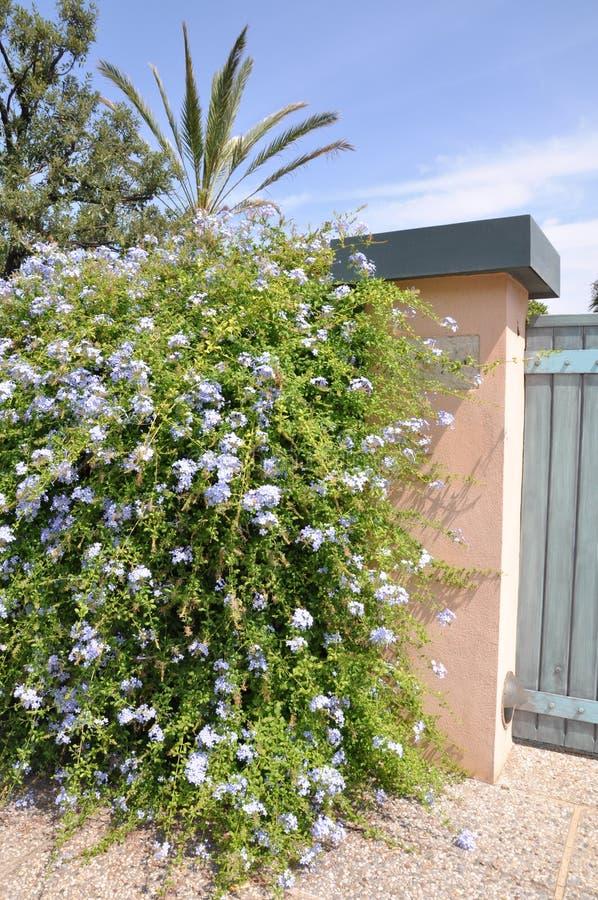 Puerta de madera con un arbusto verde grande foto de archivo