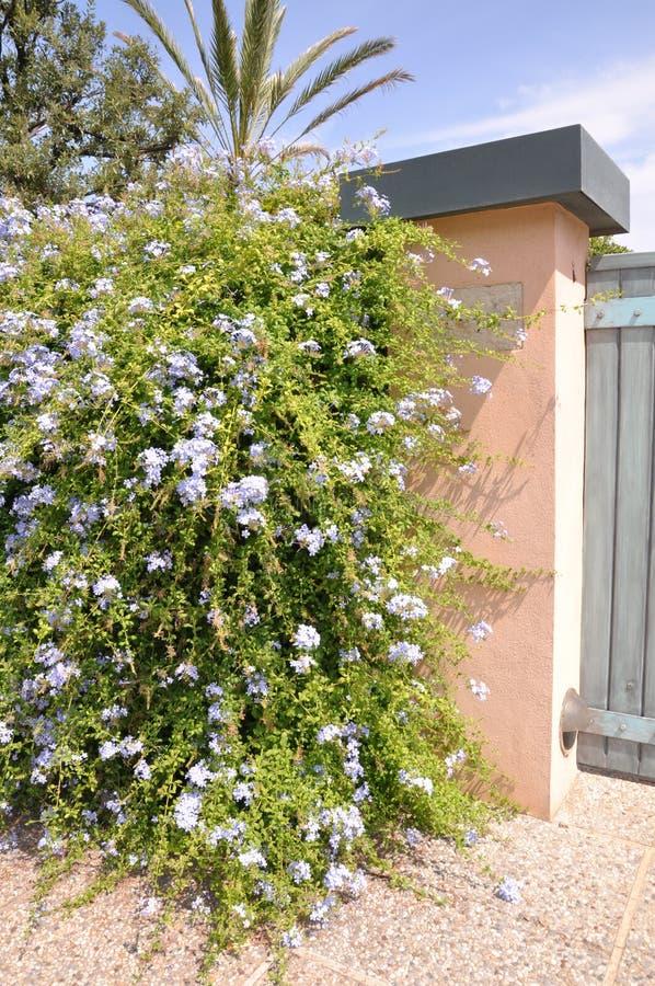 Puerta de madera con un arbusto verde grande fotos de archivo