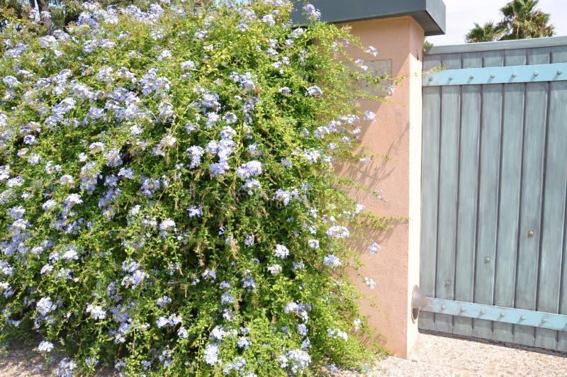 Puerta de madera con un arbusto verde grande imagenes de archivo