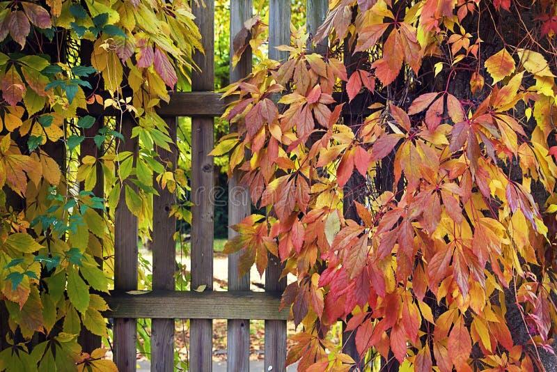 Puerta de madera cubierta por las hojas otoñales imágenes de archivo libres de regalías