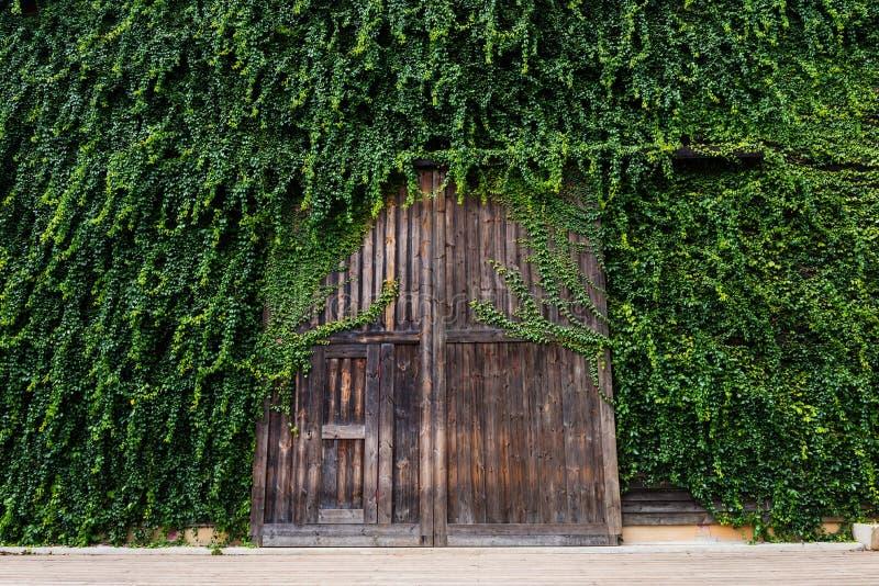 Puerta de madera grande con las hojas del escalador imágenes de archivo libres de regalías